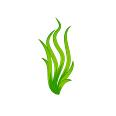 alga_spirulina