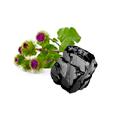 carbone_bardana